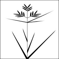 Sedge leaf