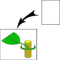 Scythe shape stipule