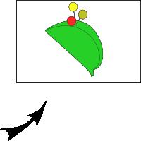 Bracteate inflorescence