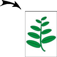 Paripinnate; leaflets alternate