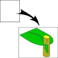 Decurrent leaf