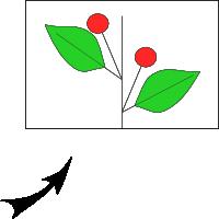 Axillary solitary flower