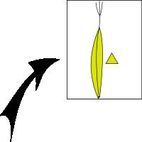 Achene trigonous