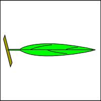 Linear leaves