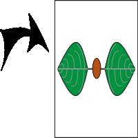 Opposite leaves equal