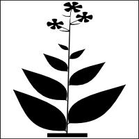 Broadleaf plant
