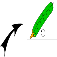 Cylindrical pod in section
